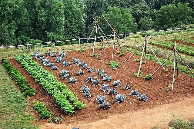 10 Dicas para uma Jardinagem Sustentável